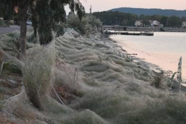 Συγκλονιστικές φωτογραφίες: Τεράστιο «πέπλο» από ιστούς αράχνης «κατάπιε» 300 μέτρα βλάστησης στο Αιτωλικό!