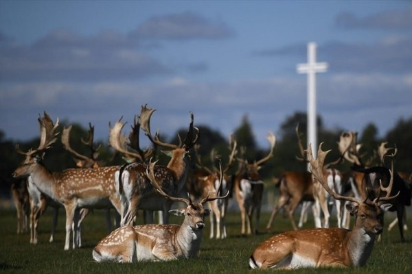 Η φωτογραφία της ημέρας: Ελάφια ξεκουράζονται μπροστά από τον παπικό σταυρό!