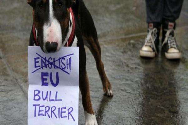 Λονδίνο: Σκύλοι διαδηλώνουν κατά του Brexit! (photos)