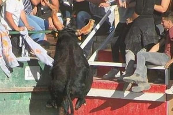 Τραγωδία στις Κάννες: Ταύρος σκότωσε με τα κέρατά του γυναίκα σε ταυρομαχία! (video)