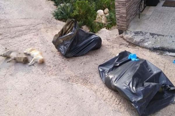 Φρίκη στο Πέραμα: Γέμισαν με φόλες παιδική χαρά! Τουλάχιστον 10 ζωάκια νεκρά!