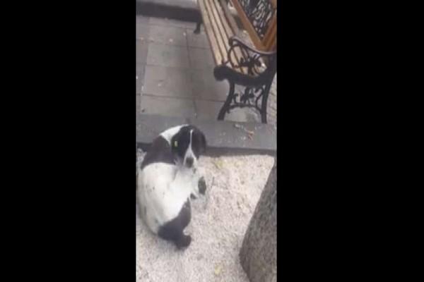 Ραγίζει καρδιές το κλάμα σκύλου που βρίσκει το αφεντικό του 3 χρόνια μετά! (video)