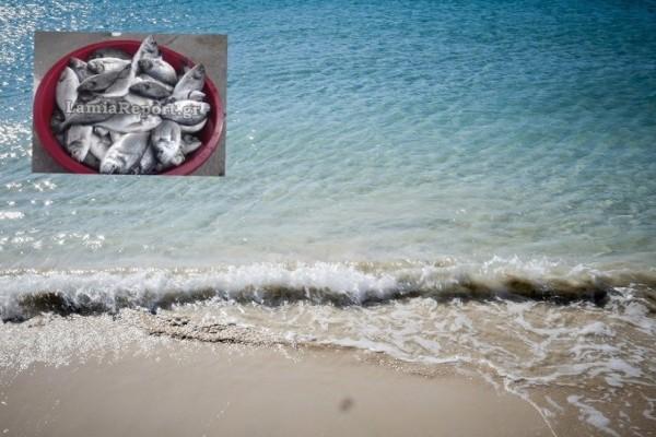 Δεν προλαβαίνουν να ψαρεύουν τσιπούρες σε βόρεια Εύβοια και Φθιώτιδα!