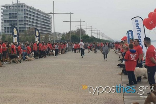 Η Νέα Παραλία Θεσσαλονίκης γέμισε με… 101 σκυλιά!