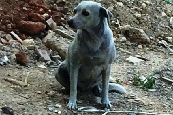 Κρήτη: Ασυνείδητοι έβαψαν με μπλε μπογιά σκυλίτσα!