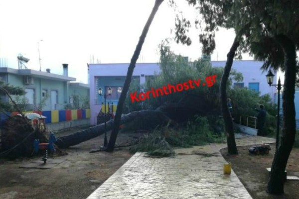 Κόρινθος: Δέντρο ξεριζώθηκε και έπεσε σε νηπιαγωγείο! (photos)