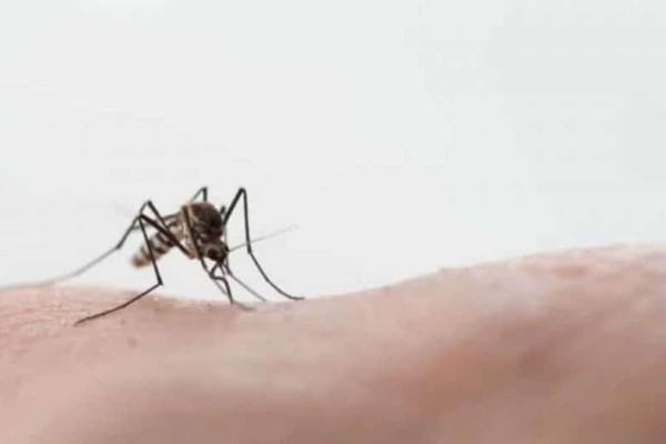 Αυτό είναι το κόλπο για να μην σας τσιμπήσουν τα κουνούπια ποτέ!