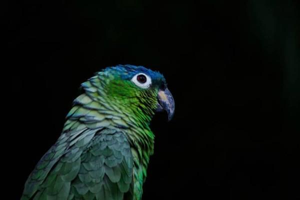 Αυτός ο παπαγάλος θα σας κάνει να γελάσετε! Δείτε τι έκανε(video)