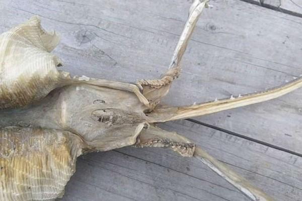 Μυστήριο με θαλάσσιο πλάσμα που εμφανίσθηκε στη Νέα Ζηλανδία!