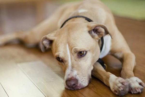 Θρίλερ στη Καλαμπάκα με έμβρυο που βρέθηκε στο στο σώμα σκυλίτσας (Σκληρές εικόνες)