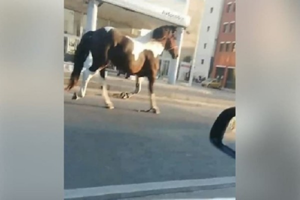 Το άλογο που έγινε viral! - Έκοβε βόλτες στο κέντρο της Θεσσαλονίκης! (Video)