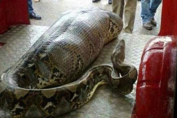 Η γυναίκα και το φίδι: Μια διδακτική ιστορία για τους φίλους-φίδια!
