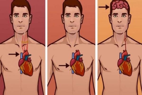 Τεράστια προσοχή: Έτσι θα καταλάβετε αν παθαίνετε εγκεφαλικό, έμφραγμα ή καρδιακή ανακοπή!
