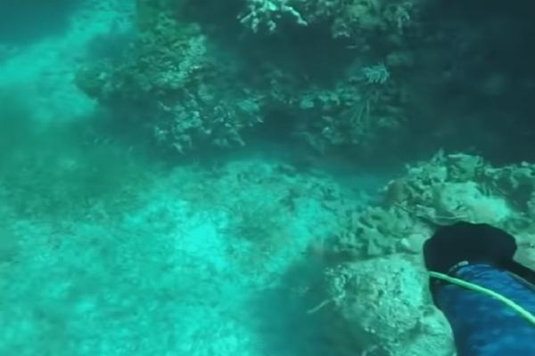 Σοκαριστικό βίντεο: Καρχαρίας δαγκώνει δύτη στο κεφάλι!