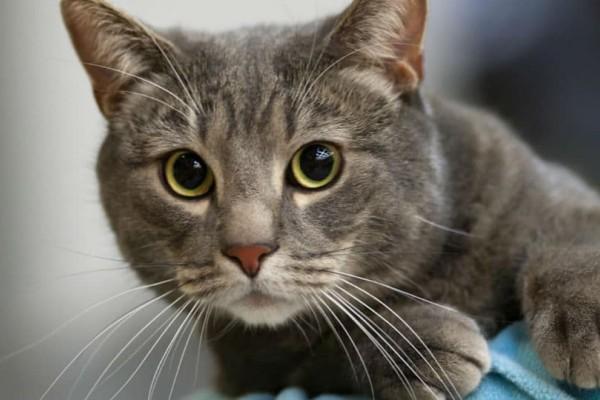 Αξιολάτρευτη γάτα κάνει κοιλιακούς και τρελαίνει το διαδίκτυο!