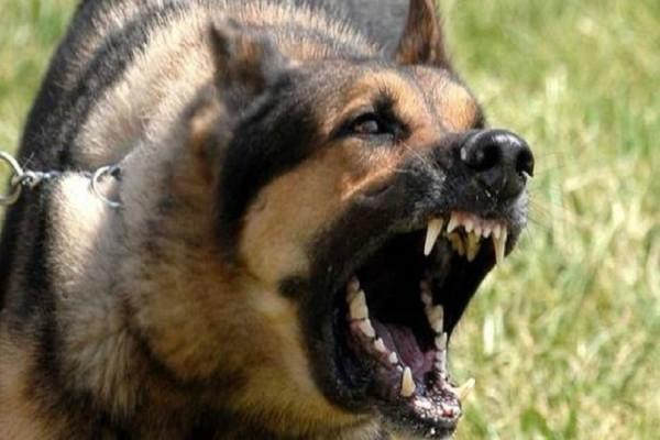 Σοκ για 25χρονη στην Αχαΐα: Της επιτέθηκε αδέσποτος σκύλος!