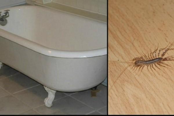 Να γιατί δεν πρέπει ποτέ να σκοτώσετε μια σαρανταποδαρούσα μέσα στο σπίτι σας!