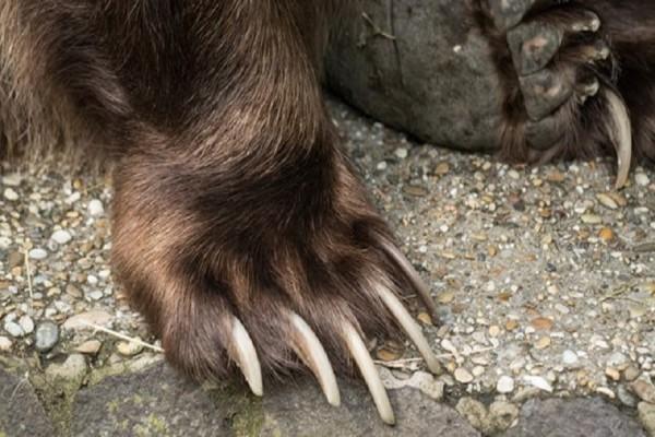 Φρίκη στην Κοζάνη: Σκότωσαν, ακρωτηρίασαν και αποκεφάλισαν έγκυο αρκούδα!