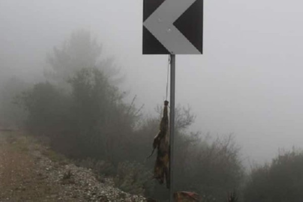 Κτηνωδία στη Λέσβο: Κρέμασαν αλεπού σε πινακίδα