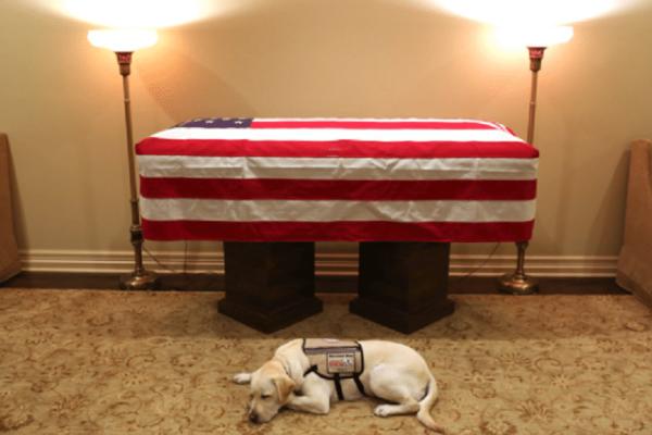 Απίστευτη φωτογραφία: Ο πιστός σκύλος του Τζορτζ Μπους μπροστά από το φέρετρό του!
