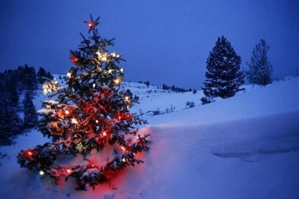 Χριστουγεννιάτικο δέντρο: Η ιστορία του εθίμου και το μεγάλο δίλημμα!