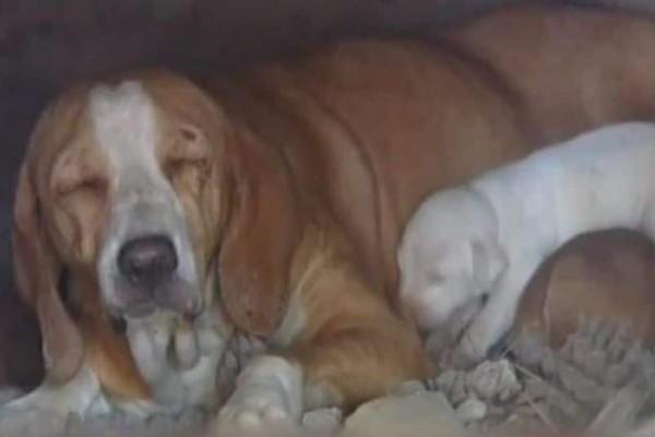Κέρδισε την μάχη για τη ζωή η σκυλίτσα που είχαν κλείσει σε φούρνο μαζί με τα κουτάβια της!