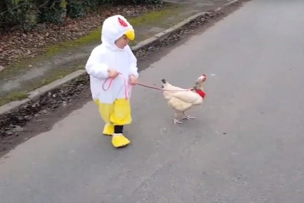 Επικό: Το κοριτσάκι που έχει κότα για κατοικίδιο! - Οι βόλτες τους είναι μοναδικές! (Video)