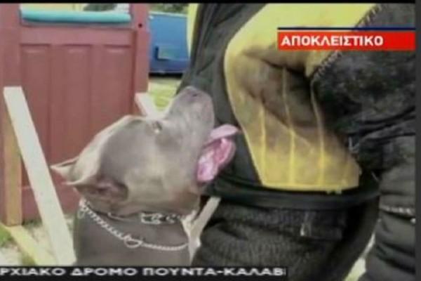 Μαρούσι: Αγέλη αδέσποτων τρομοκρατεί τους κατοίκους! (video)