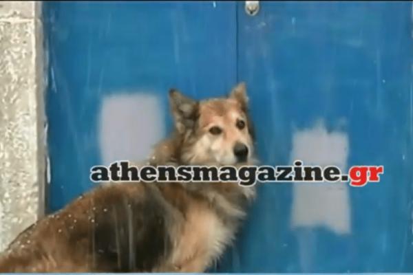 Έγκλημα στην Κέρκυρα: Ο πιστός σκύλος της Αγγελικής οδηγούσε τους αστυνομικούς στο σημείο που βρέθηκε νεκρή! (video)