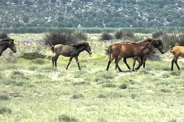 Κτηνωδία στην Αιτωλοακαρνανία: Άγνωστοι πυροβόλησαν και σκότωσαν άγρια άλογα