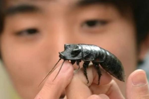 Είχε σχέση έναν χρόνο με μια κατσαρίδα και όταν πέθανε την...έφαγε!