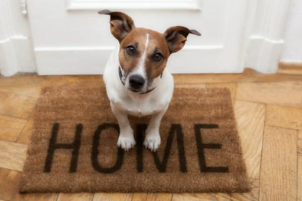 Ο σκύλος σας μαδάει; Ιδού πώς θα απαλλαγείτε από τις τρίχες του άμεσα!