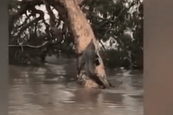 Αυστραλία: Εκτεταμένες πλημμύρες σάρωσαν την χώρα! - Βγήκαν ακόμη και κροκόδειλοι στους δρόμους!