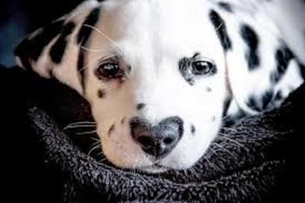 Viral ο σκύλος με τη μύτη-καρδιά -Λιώνει το Ιντερνετ