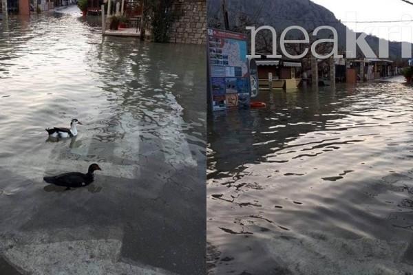 Πάπιες κολυμπάνε στους δρόμους των Χανίων – Πλημμύρισαν καταστήματα !