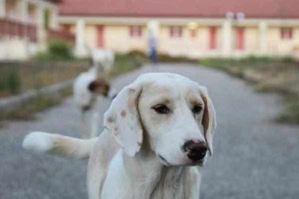 Μεσολόγγι: Πυροβόλησαν και σκότωσαν αδέσποτο σκυλάκι!