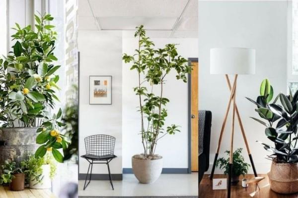 Μήπως πρέπει να πάρεις κι εσύ ένα σπίτι σου; - Αυτά είναι τα φυτά που χαρίζουν... οξυγόνο!