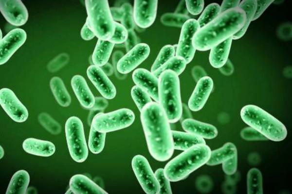 Ανακαλύφθηκαν στο ανθρώπινο έντερο σχεδόν 2.000 άγνωστα μέχρι σήμερα είδη βακτηρίων