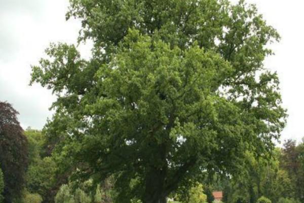 Λαθροϋλοτόμοι έκοψαν αιωνόβιες δρύες από το δάσος του Ξηρομέρου