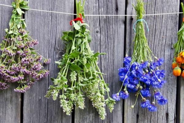 Αυτό είναι το ελληνικό βότανο που προστατεύει από καρκίνο και διαβήτη!
