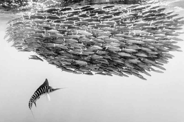 Sony World Photography Awards: Oι εντυπωσιακές φωτογραφίες απο όλο τον κόσμο!