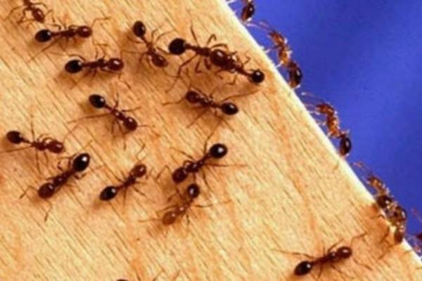 Μυρμήγκια στο σπίτι: Έτσι θα τα διώξετε με απόλυτα φυσικό τρόπο!