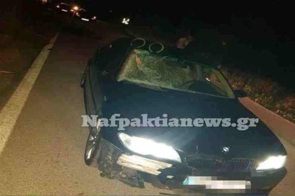 Ναυπακτία: Αυτοκίνητο συγκρούστηκε με άγριο άλογο και το σκότωσε! (photos - video)