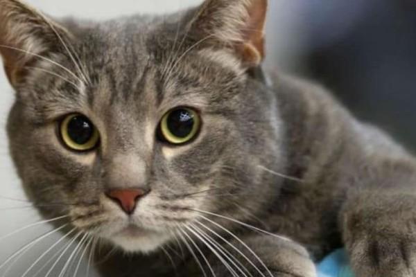 Έχετε γάτα ή…. η γάτα έχει εσάς; Δείτε το βίντεο και θα καταλάβετε!