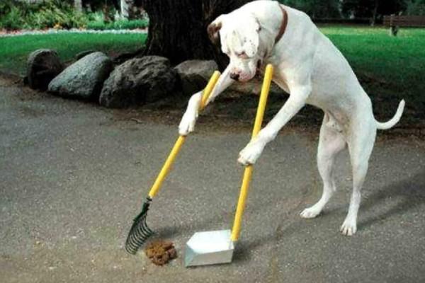 Πρόστιμο για όσους δεν μαζεύουν τις ακαθαρσίες του σκύλου από τους δρόμους και τα πάρκα!