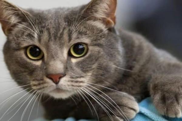 Αλμυρό Μαγνησίας: Πρόστιμο 30.000 ευρώ που κάρφωσε γάτα με βέλος!