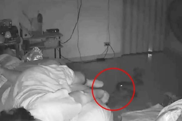 Συγκλονιστικό βίντεο: Πύθωνας δαγκώνει το πόδι μιας γυναίκας!