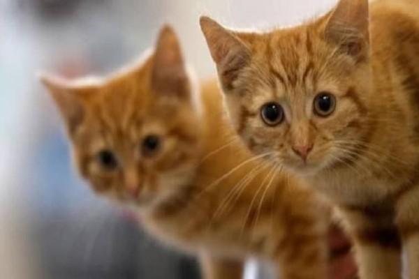 Σάλος και οργή για ανάρτηση με συνταγή για φόλες στις γάτες!