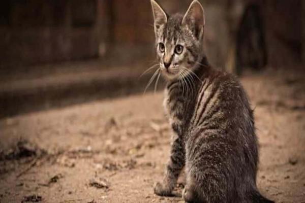 Oργή έχει προκαλέσει σε όλο το Facebook η Ρεθυμνιώτισσα με συνταγή για φόλες στις γάτες!