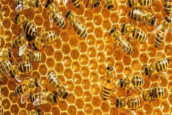 Πρέβεζα: 63χρονος έκλεβε για έναν ολόκληρο χρόνο τις κυψέλες μελισσοκόμου!